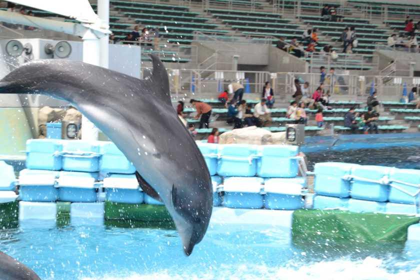 ڈولفن